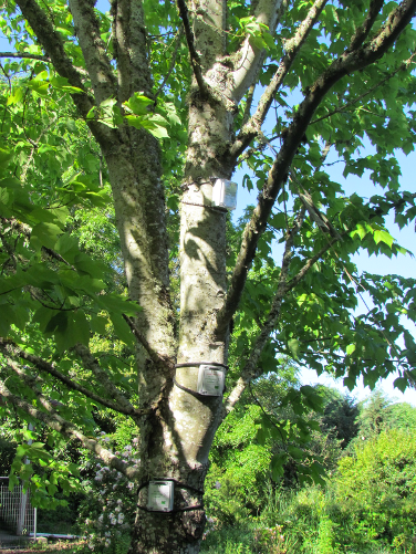 Well Instrumented Tree